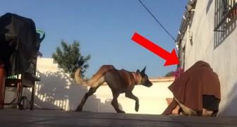 Er kommt nach Hause und macht einen Scherz mit seinem Hund: Die Reaktion wird euer Herz erwärmen