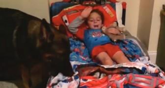 Das machen dieser Junge und sein Hund jeden Abend, bevor sie ins Bett gehen