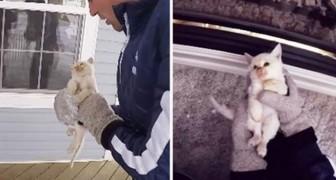 Trovano un gatto congelato nella neve, ma appena perdono le speranze avviene l'impensabile