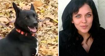 Un cane percorre più di 300 km per tornare dalla donna che gli ha salvato la vita