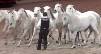 Los caballos comienzan a correr hacia él...lo que logran hacer juntos es asombroso