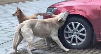 Een man heeft een hond weggejaagd door het dier weg te schoppen, maar hij heeft er niet op gerekend dat de hond zou terugkomen voor wraak!