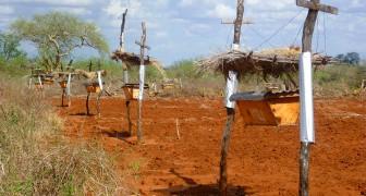 Afrikaanse boeren installeren bijenkorven langs hun velden - maar niet voor de honing!