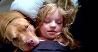 Dit meisje is autistisch: haar pitbull begrijpt haar zoals niemand anders op de wereld haar begrijpt