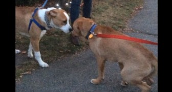 They were adopted separately, but one day they meet again: here's their reaction ...