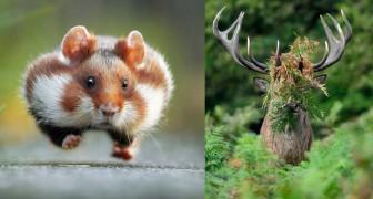 È nato un concorso che premia le foto più comiche degli animali: ecco chi sono i vincitori