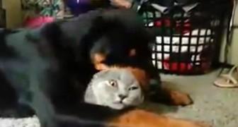 Un momento RARISSIMO tra gatto e cane... Non capiterà mai più!