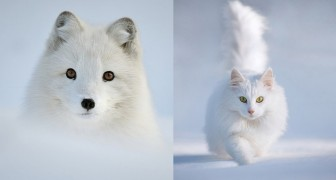 18 foto's om van te dromen van dieren die zich een weg door de sneeuw banen