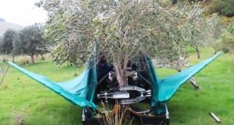 El modo en que esta maquina recoge las olivas es increible e hipnotico!