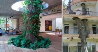 18 case geniali che sono state realizzate salvando la vita degli alberi