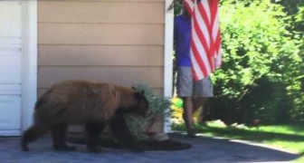A bear and a man come face to face: their reaction is ... IDENTICAL!