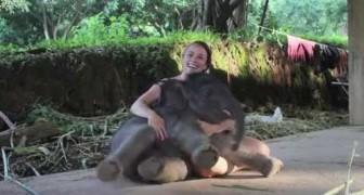 Um elefante de duas semanas mostra um afeto lindo por sua cuidadora