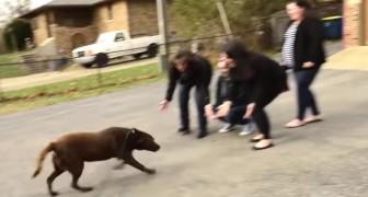 Um labrador foi estava longe por 5 anos: este é o momento em que ele retorna para sua família
