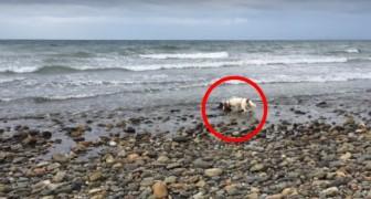 Il suo cane nota qualcosa sulla spiaggia: un piccolo amico ha bisogno di aiuto!