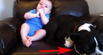 Deze hond ligt lekker knus bij de baby, maar dan doet de baby iets waar de hond niet zo van is gediend!