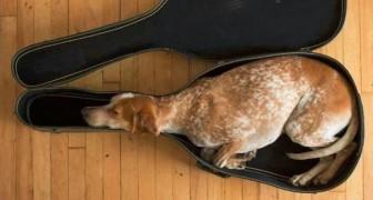 Diese 15 Fotos zeigen, dass es für einen Hund möglich ist ÜBERALL zu schlafen...