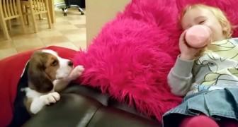 Deze puppy probeert het kindje op de bank te bereiken: als het hem lukt, volgt er een hartverwarmend tafereel