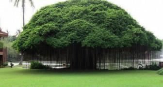 9 majestueuze bomen die de pracht van de natuur vertegenwoordigen
