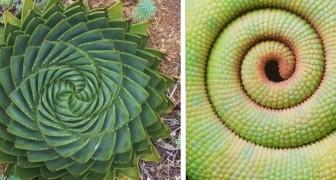 Deze verrassende geometrische vormen uit de natuur zullen je hypnotiseren