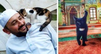 In deze moskee bidden de gelovigen omringd door katten: de reden hiervoor is ontroerend