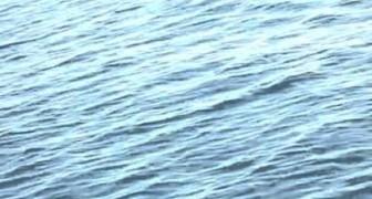 Incontro riavvicinato con una balena