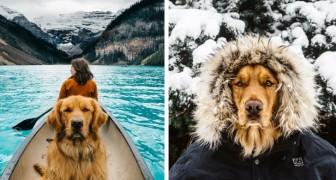Deze hond mocht mee op een reis om de wereld en hij heeft bewezen dat hij de beste reisgenoot is die er bestaat