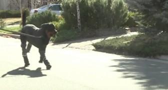 Dopo aver perso tutte e quattro le gambe, questo cane fa molto di più che camminare...