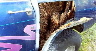 Corta un panel de su auto...lo que encuentra debajo es espantoso