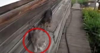 Ele pede para o cão trazer o gato de volta: o que acontece é quase irreal