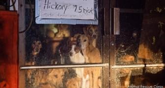 Il salvataggio di 21 cani dimenticati in un negozio abbandonato