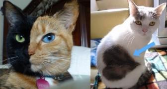 10 chats que la nature a voulu PARTICULIERS!