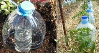 Here is an ingenious technique to irrigate plants and save a lot of water!