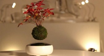Avete mai visto un bonsai sospeso in aria? Qualcuno lo ha creato... ed è bellissimo