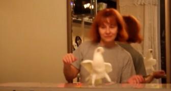 Deze vrouw zet haar papegaai op zijn stok... Als de muziek begint te spelen, kun je je lachen met geen mogelijkheid inhouden
