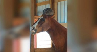 Va a controllare il cavallo, ma non si aspettava di trovare QUESTO sulla sua testa