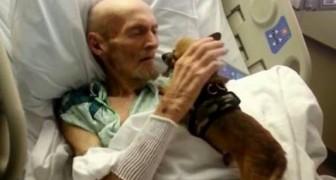 Sie lassen Hunde ins Krankenhaus, um ihre Herrchen aufzumuntern: Die Folgen sind überraschend