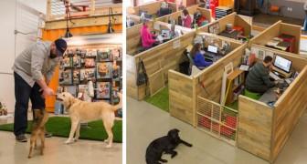 Portare i cani sul posto di lavoro? Vi presentiamo l'ufficio più dog-friendly che esista