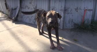 Ze treffen hem in hopeloze toestand aan op straat: een maand later is hij onherkenbaar