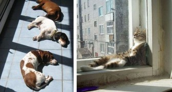 23 foto di animali che amano il caldo più di ogni altra cosa