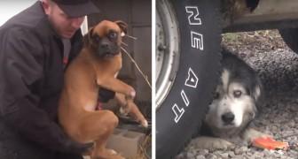43 chiens sont sauvés d'un élevage illégal... Voici ces moments touchants