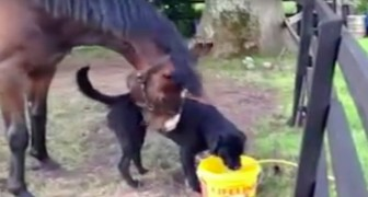 They decide to adopt a dog, but did not think they would witness a scene like that!