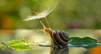20 images poétiques vous montrent les escargots comme vous ne les avez jamais vus