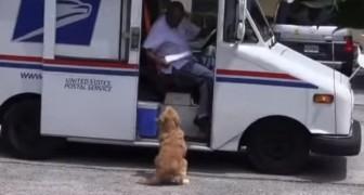 Deze hond wacht elke ochtend op de postbode... Wat hij dan doet is schattig!