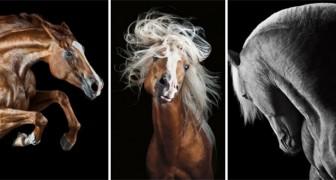 Une photographe capture la beauté de l'animal qu'elle aime le plus au monde