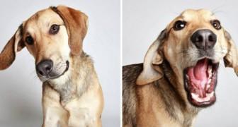 19 chiens errants à la recherche de famille posent pour une séance photo unique en son genre