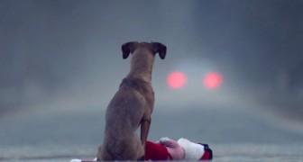 L'abbandono di un cane: tutti dovrebbero guardare il video qui prima di prenderne uno.
