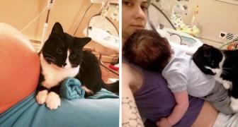 Ce chat a commencé à protéger son petit humain avant même qu'il soit né