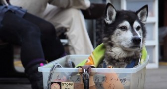 Voilà comment devraient être traités tous les chiens plus âgés: ceci est de l'amour pur