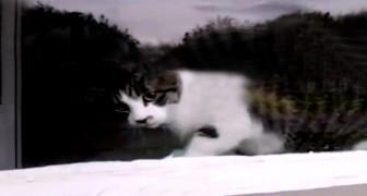 De postbode ziet een kat in het raam: wat er dan gebeurt is hilarisch!