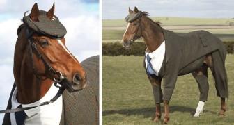 Realizzano un completo per un ex cavallo da corsa... il risultato è eleganza pura!